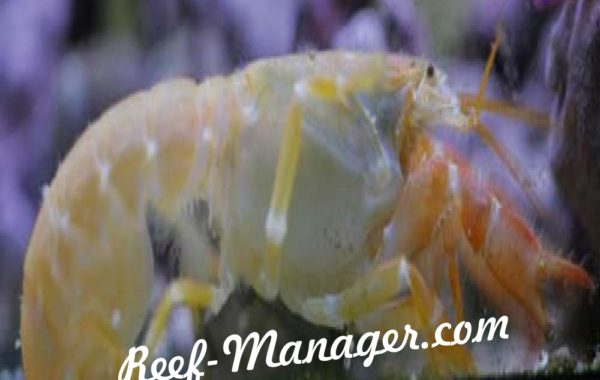 Axiopsis